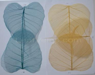 Bodhi Skeleton Leaves - Cerulean Blue and Golden Yellow