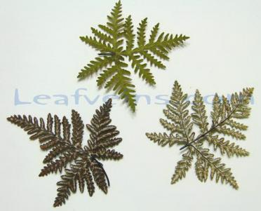 Lip Fern Front and Back