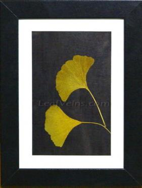 Framed Ginkgo Leaves 2