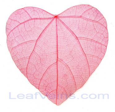 Heart-shaped Skeleton Leaves