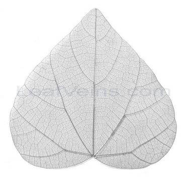 Heart-haped Skeleton Leaf (Grey)
