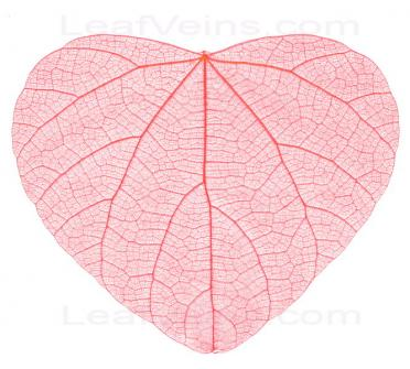 Heart-haped Skeleton Leaf (Red)