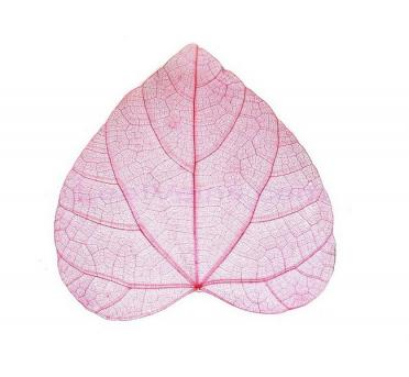 Heart-shaped skeleton leaf Red