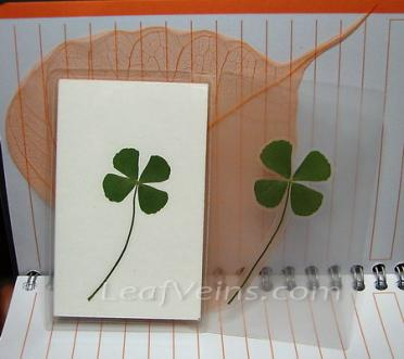 Laminated Green Four Leaf Clover Card