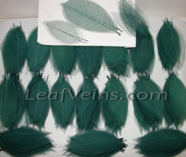 Magnolia Skeleton Leaves Custom Color