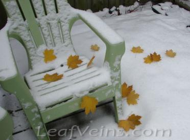 Dried Maple Leaves Show in Snow 01