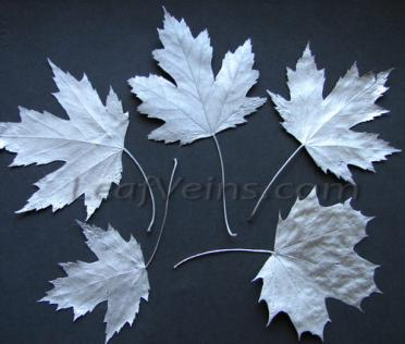 Dried Maple Leaves in Silver Color
