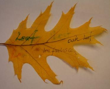 Bleached or Dyed Oak Leaves Are Writable