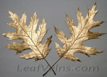 Dried Oak Leaves Metallic Bronze Color
