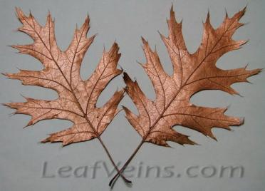 Dried Oak Leaves Metallic Copper Color
