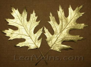 Dried Oak Leaves Metallic Gold Color