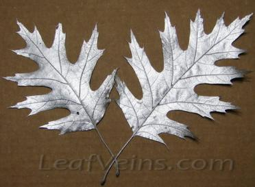 Dried Oak Leaves Metallic Silver Color