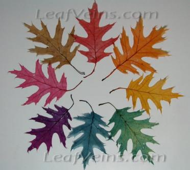 Oak Leaves Dyed