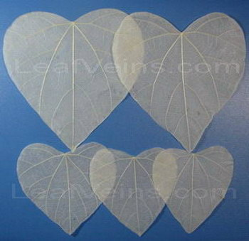 Printable Heart Shaped Skeleton Leaves